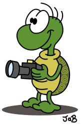 Schildkröte foto-christ.de